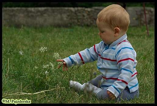 Sergiusz i kwiatki